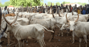 Senate considers creation of database for cows, goats