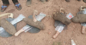Cross River LG chairman empowers youths each with one tuber of yam, hoe and cutlass